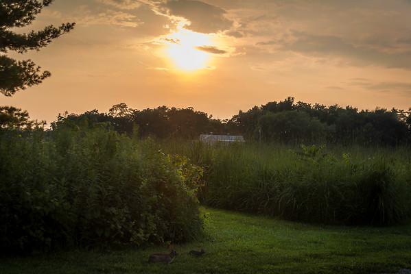 Wild Rabbits Feeding In The Evening Light At Charleston Falls Preserve Miami County Ohio 7-27-2015